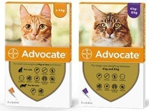 Bayer Advocate spot on for Cats Group Photo