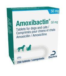 Dechra Amoxibactin 50mg Tablets for dogs and cats pack of 250