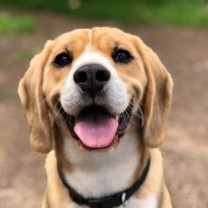 Blog Guide to worming your dog