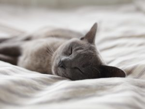 Blog How to protect our cat from fleas