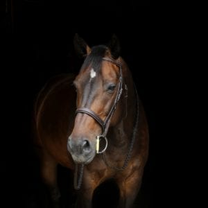 Blog How to spot and prevent mud fever in horses