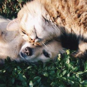 dog cat grass