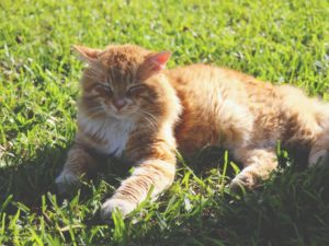 Dealing with obesity in cats