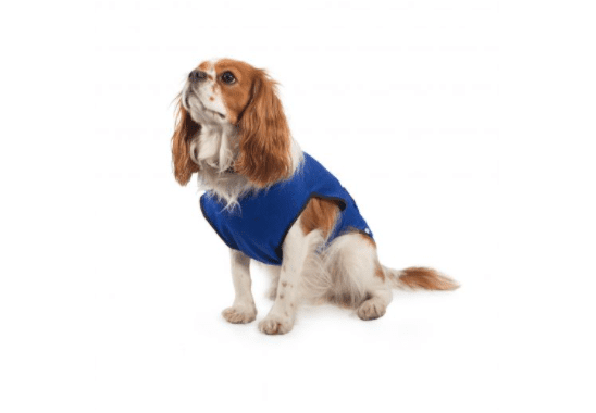 Ancol Dog Cooling Coat for dogs