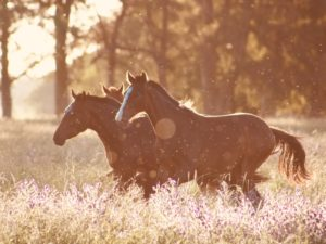 group-of-horses-2889742
