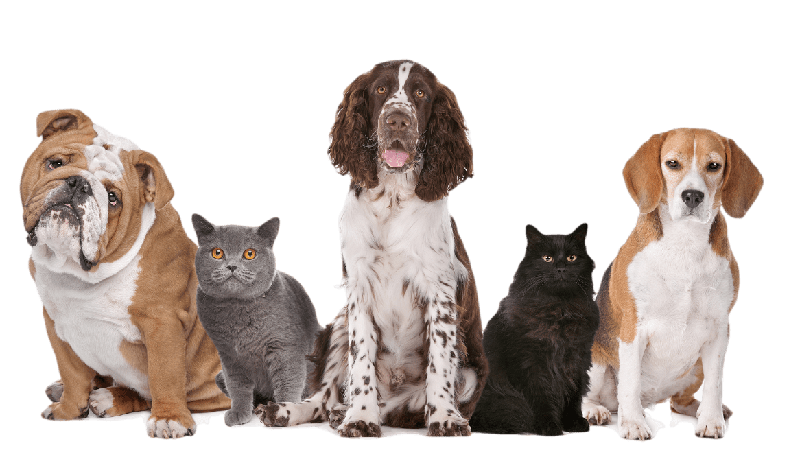 dogs and cats group shot