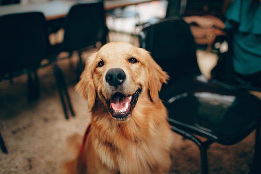Happy dog showing teeth