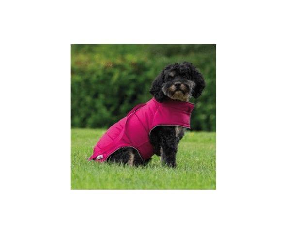 Dog wearing a Doodlebone Combi puffer jacket