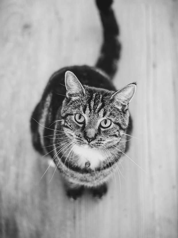 Cat-1_cf9708ee0936c4262c1c986018dfa699 (1)