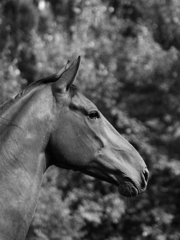 Horse-1_c57f676ab1f089b440b93847819c5eee