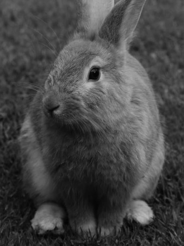 Rabbit-Centered (1)